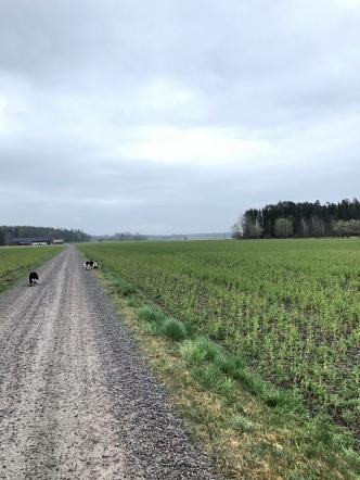 I måndags var första mulna och småregniga dagen på länge.